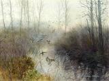 Ducks-Arthur Shilstone