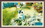 Colourful Caturday Art