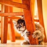 Kitten Playground...