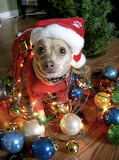 Christmas Dog funny pictures (92)