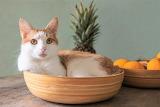 favourite bowl