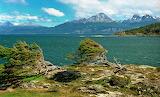 Tierra del Fuego - Nothofagus
