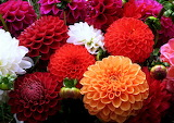 #Pretty Colorful Flowers