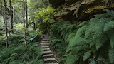 Australia trail park new south wales