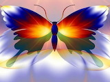 Amazing-colorful-butterfly 101033