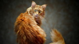 Animals-cat-yellow-look