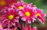 ☺ Spring beauties...