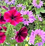 De mi jardín 832