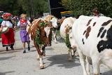 Slovenia, Bohinj, Cow Ball
