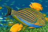 #Colorful Fish