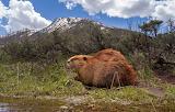 Basking Beaver