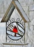 POTW : My back yard cardinal