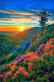 Floral hillside