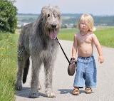 Just a boy walking his dog