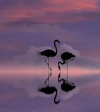 Serenly mirrored