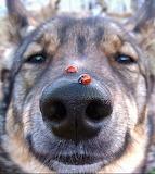 Dog and Ladybugs