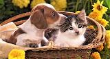 #Cute Friends