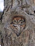 Birds - Sleeping Owl ... nicely camoflaged