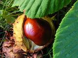 Chestnut-place-