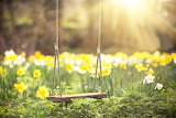 Spring, daffodils, swings