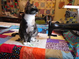 Cute Quilter