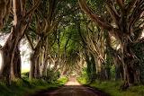 Awesome-Tree-Corridor-Road-in-Northern-Island-600x400