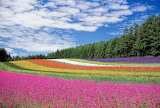 Flower Fields - Photo from Piqsels id-jrwwd
