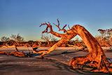 Driftwood at Sunset Over Jekyll Island Georgia USA