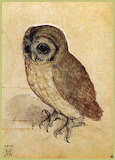 The little owl durer