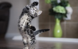 ☺♥ Cute little dancer...