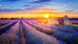 Provence (Valensole 04)