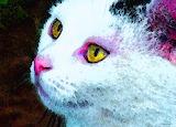 Cat Art - Pink Nose by Sharon Cummings.