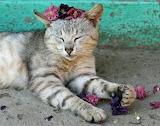 Cosy kitty