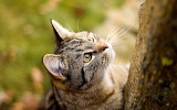 Cat-animal