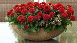 Leaves, flowers, bouquet, green, red, pot, chrysanthemum, cerami