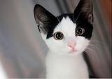 Cutest-cat-picture-ever