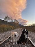 Fonzi and Barley on the RR tracks