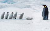 Penguin school