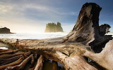 Second Beach. near Olympic National Park and La Push. Washington