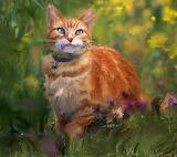 cat-in-flowers-tim-rampy