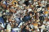 Shell-pond-