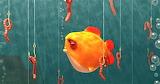 #Luring Goldfish