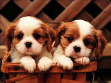 #Puppies in a Basket