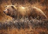 WM Bear 5