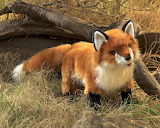 red fox babe