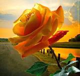 Zachód słońca z różą