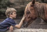 Little Boy And A Horse