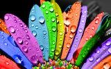 Petalos-de-mil-colores