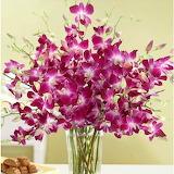 Orchids-flowers
