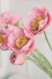 Pink, ameronicole